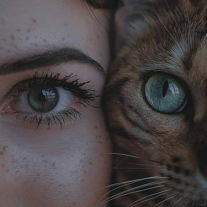 lovecats-cat-lady