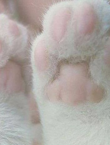lovecats-cat-paws