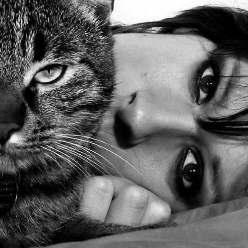 lovecats-cat-human-portrait (7)